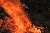 Mega necesario comité contra incendios en Lázaro Cárdenas